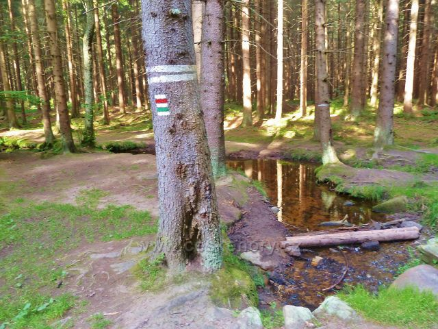 Sněžné - Černý potok u cesty ke skalnímu útvaru Dráteničky