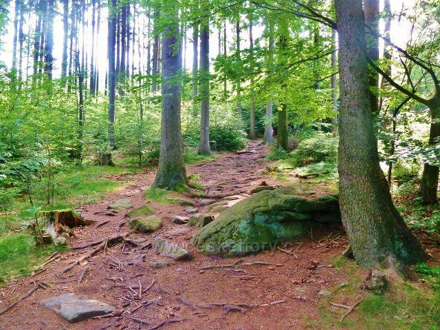 Sněžné - poslední úsek trasy po červené TZ ke skalnímu útvaru Dráteničky vede po kamenité stezce lesním porostem
