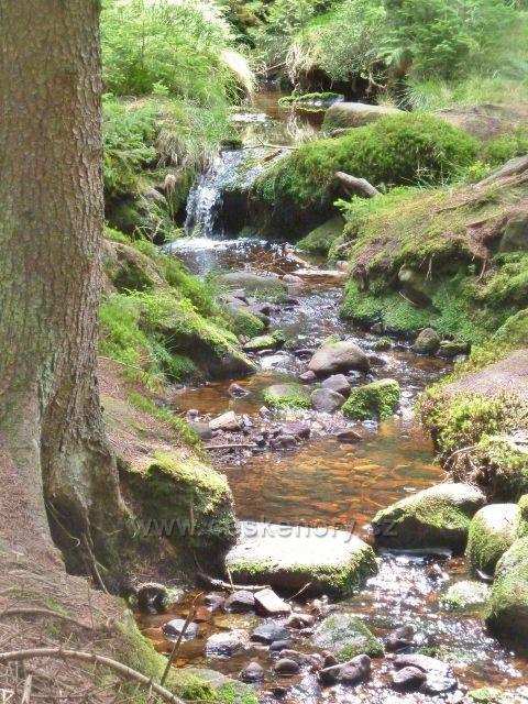 Sněžné - Studený potok, jeden z mnoha přítoků Svratky