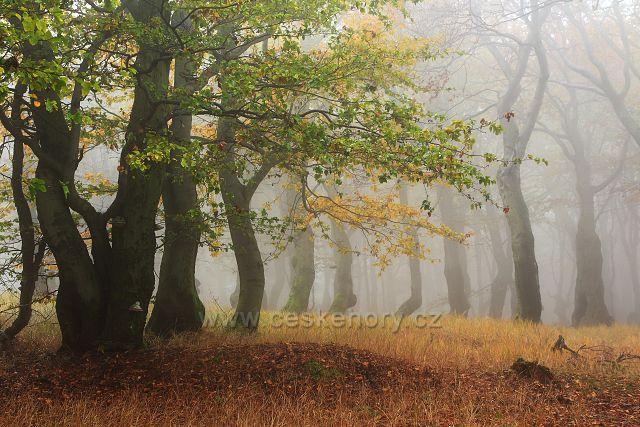 Bukový les na Bouřňáku