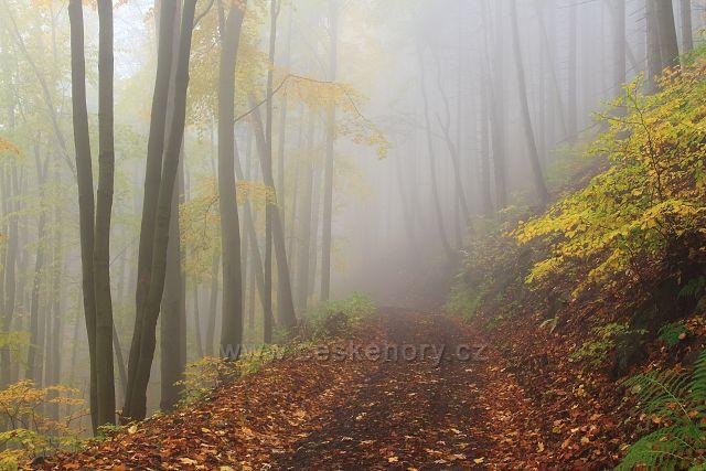 Les pod Mikulovem