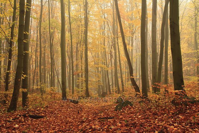 Les v Albrechtickém údolí