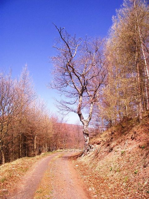 cesta na Jedlovou horu