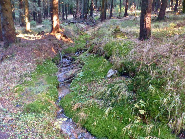 Orlické hory - jeden ze zdrojů levostranného přítoku Hlubokého potoku pod svým prameništěm
