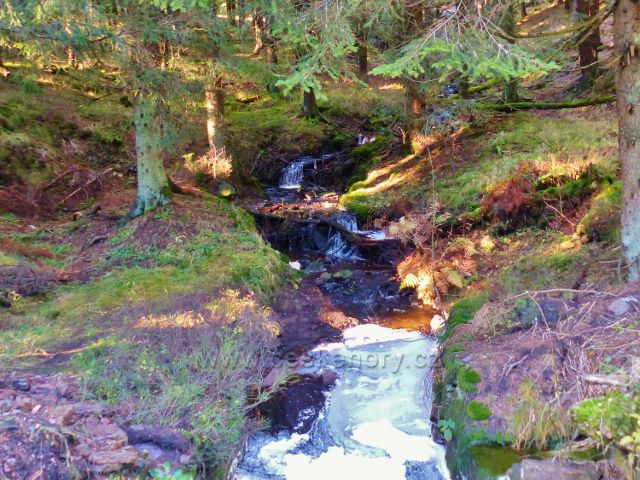 Orlické hory - Čertovodolský potok před mostkem u rozcestí Pod Homolí