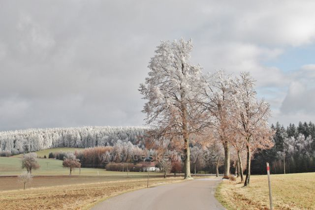 Bubnov - pohled ze Zmrzlíku k zaječinské myslivně a na Žamberské lesy