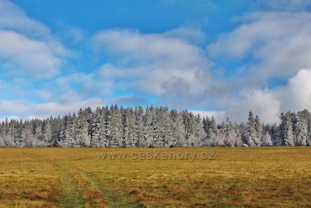 Niemojów - okraj lesa nad obcí. Cesta po trase černé TZ přes pastviny