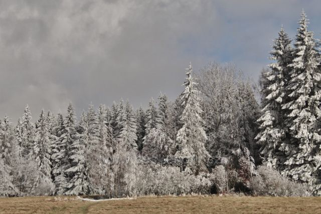 Niemojów - okraj lesa nad pastvinou podél cesty k rozhledně Czerniec.