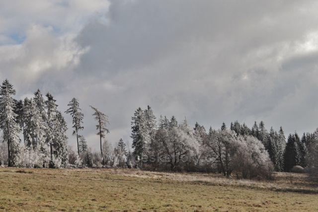 Niemojów - lesní stěna nad pastvinou