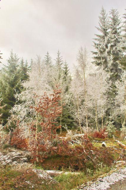 Niemojów - lesní porost podél cesty k rozhledně Czerniec