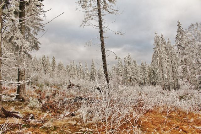 Niemojów - lesní porost na úpatí vrchu Czerniec