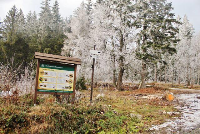 Niemojów - panel polské Lesní správy na rozcestí pěti cest