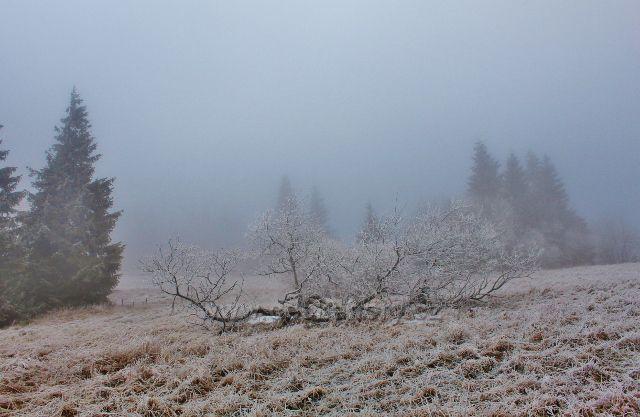 Šerlich - pastvina podél cesty k Masarykově chatě