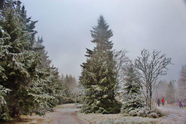 Šerlich - hřebenovka k Vrchmezí vede souběžně s e státní hranicí s Polskem