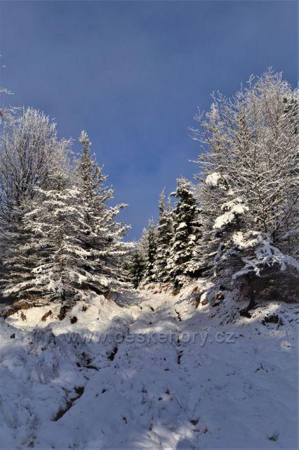 Lesní cestou v zimě ....