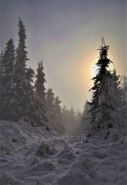 Mrazivo a mlhavo na horách ...