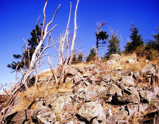 Jedlová hora