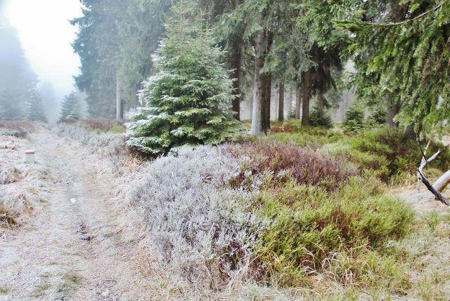 Sedloňov - neznačená stezka po Česko-polské státní hrasnici