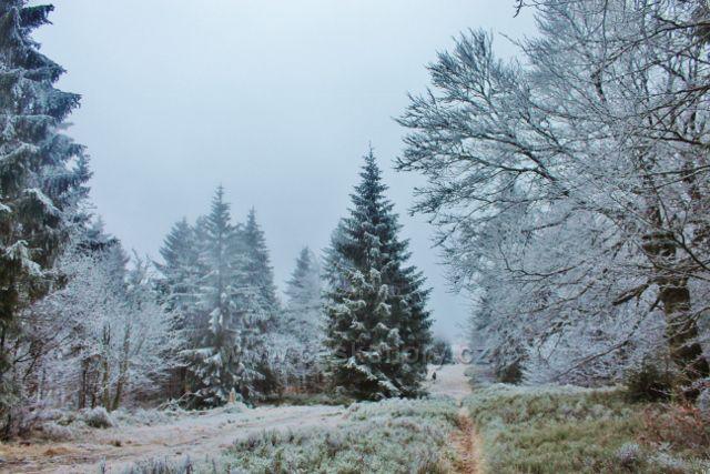 Sedloňov - hraniční stezka nad Skiareálem Zieleniec