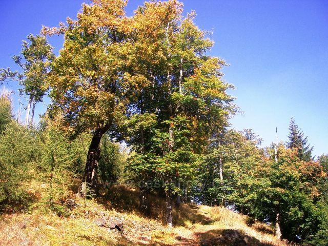 Vrch Jedlová hora