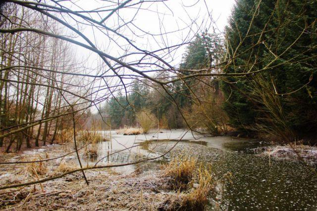 Lukavice - Záhořský rybník je napájen Dlouhoňovickým potokem