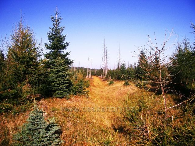 rašeliniště pod Jedlovou horou