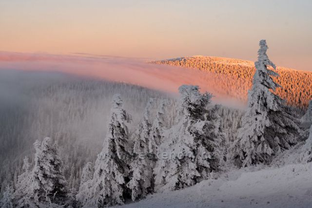 Pohled na ranní Keprník z Vřesové studánky