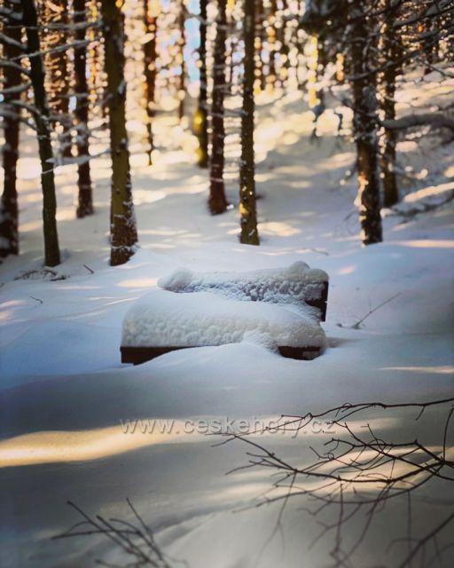 Lesní lavička
