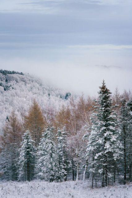 výhled v krušných horách