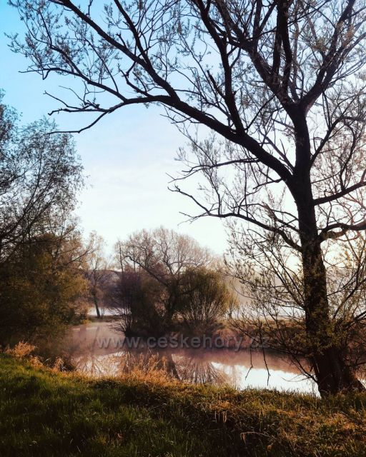 Manušický rybník