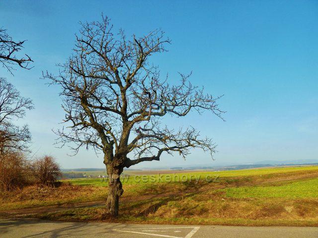 """Vamberk - letitá třešeň u silničky k chatě """"Na Vyhlídce"""""""
