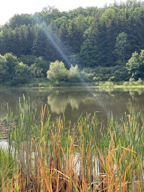 Rybník v Horní Libchavě