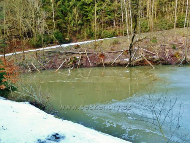 Písečná - dílo bobrů na břehovém porostu rybníku v Šušku
