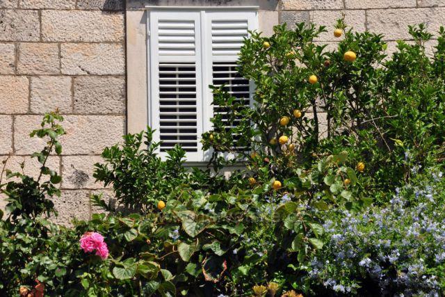 Citronovník u domu ve Viganji