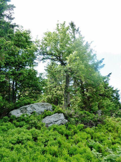 Šerlich - skalní útvar nad hraniční stezkou