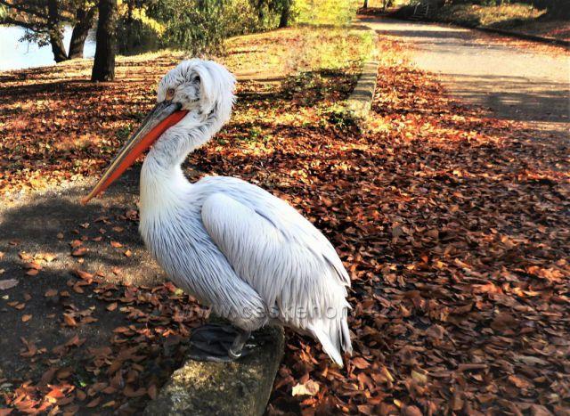 Podkrušnohorský ZOO park v podzimním čase