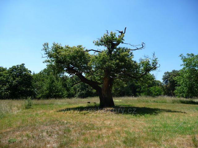 Podkrušnohorský ZOO park - nejseverněji položená alej jedlých kaštanů