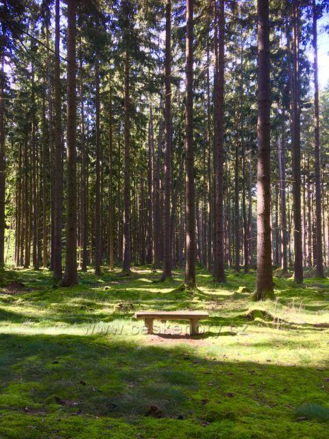 Mariánské lázně - lavička v lese