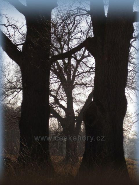 stromy v zimě v Ratibořicích