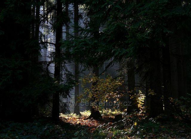lesní tajemství