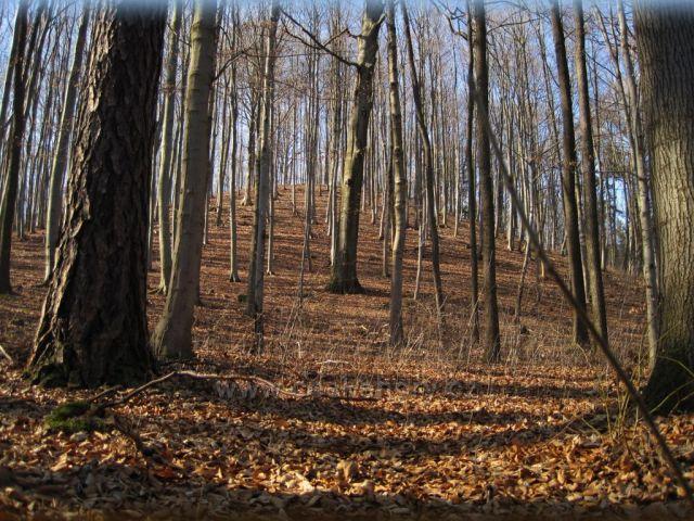 začíná jaro v lese
