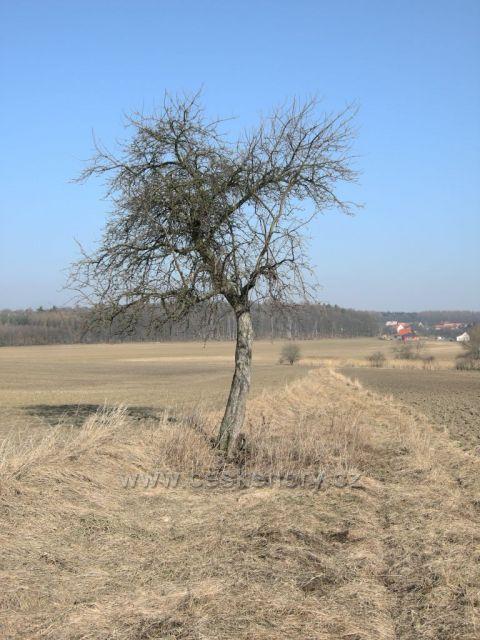 strom na jaře