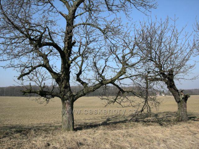 jaro v polích