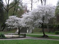 obalené stromy