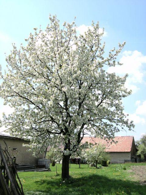 rozkvetlé jaro