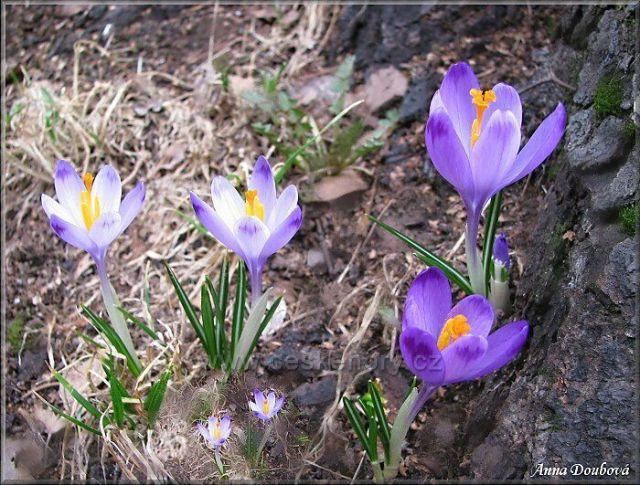 Jaro na Kozákově