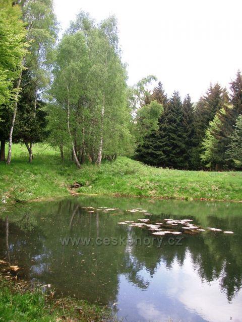 Rybníček se pstruhy a lekníny  pod Lesnou