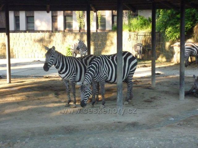 ZOO Safari Dvůr Králové