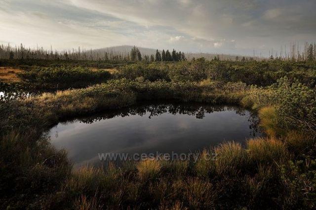 Šumava, Novohuťské močály